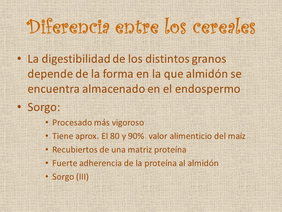 Diferencia entre los cereales La digestibilidad de los distintos granos depende de la forma en la que almidón se encuentra almacenado en el endospermo