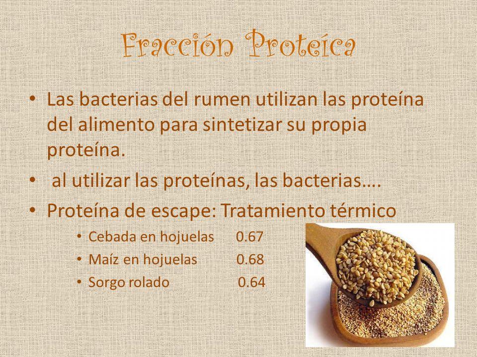 Fracción Proteíca Las bacterias del rumen utilizan las proteína del alimento para sintetizar su propia proteína. al utilizar las proteínas, las bacter