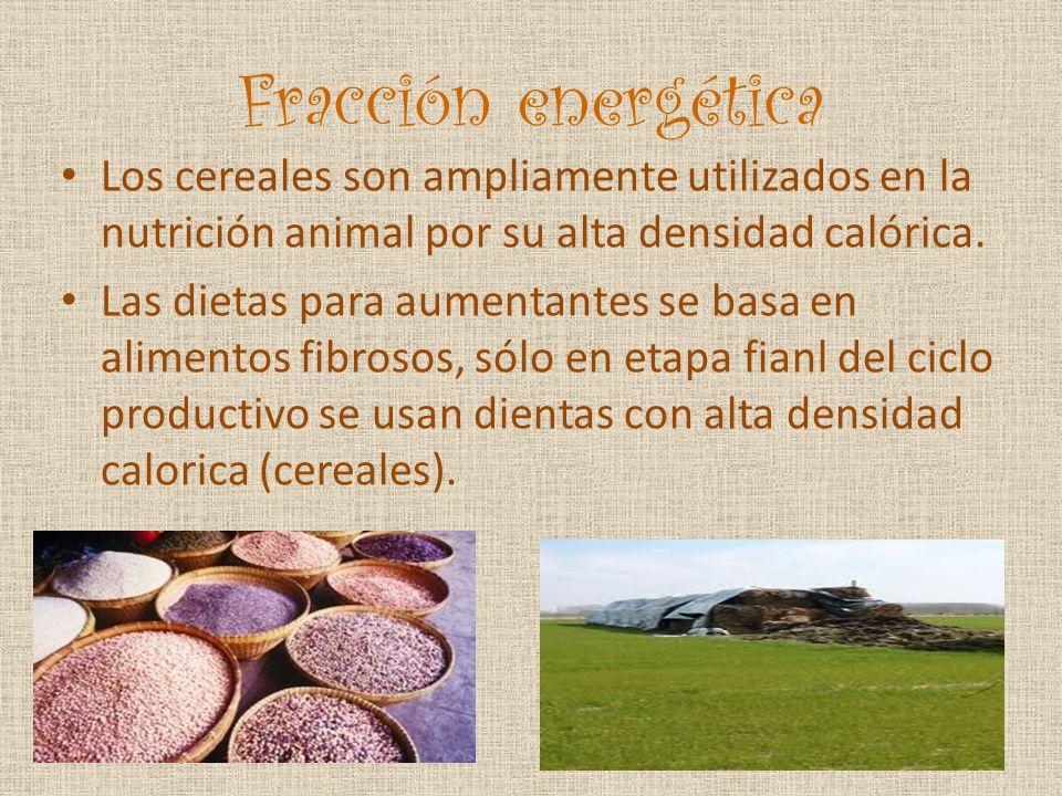 Fracción energética Los cereales son ampliamente utilizados en la nutrición animal por su alta densidad calórica. Las dietas para aumentantes se basa