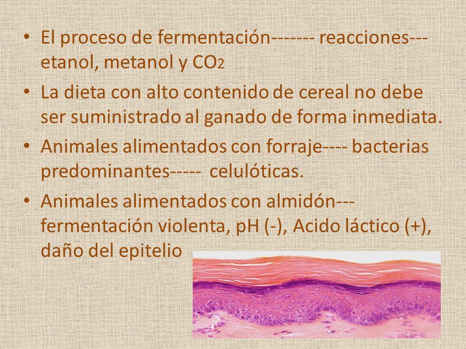 El proceso de fermentación------- reacciones--- etanol, metanol y CO 2 La dieta con alto contenido de cereal no debe ser suministrado al ganado de for