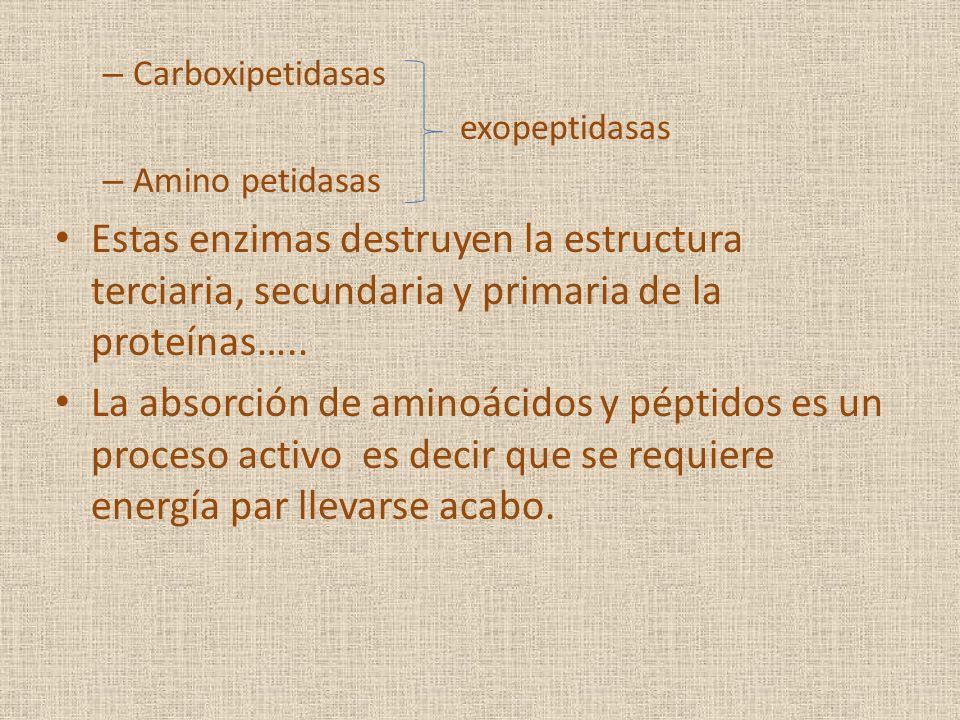 – Carboxipetidasas exopeptidasas – Amino petidasas Estas enzimas destruyen la estructura terciaria, secundaria y primaria de la proteínas….. La absorc
