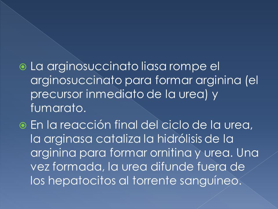 La arginosuccinato liasa rompe el arginosuccinato para formar arginina (el precursor inmediato de la urea) y fumarato. En la reacción final del ciclo