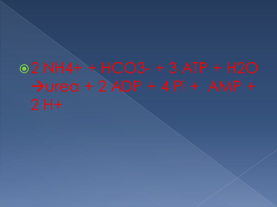 2 NH4+ + HCO3- + 3 ATP + H2O urea + 2 ADP + 4 Pi + AMP + 2 H+