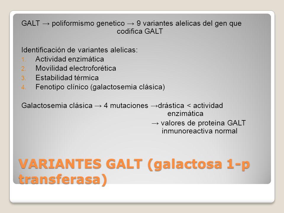 DEFICIENCIA DE GALT Variantes pacientes asintomáticos deficiencia GB GR pacientes sintomáticos deficiencia generalizada neonatos con galactosemia clásica acumulación de galactosa 1-P x falta 20% de su ingesta calórica en formade transferasa en cell de lactosa (GAL+GLU)parenquimatosas : - riñón - hígado - encéfalo - ovarios amenorrea