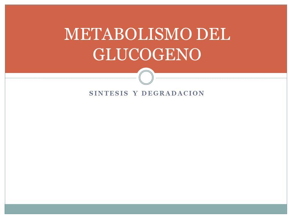 SINTESIS Y DEGRADACION METABOLISMO DEL GLUCOGENO