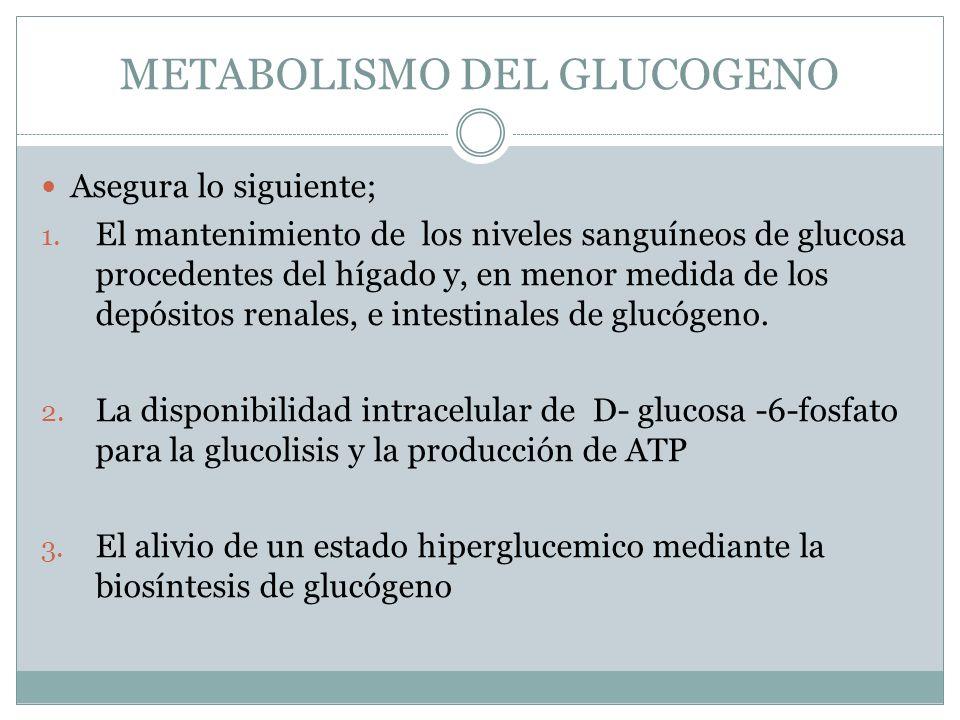 Asegura lo siguiente; 1. El mantenimiento de los niveles sanguíneos de glucosa procedentes del hígado y, en menor medida de los depósitos renales, e i