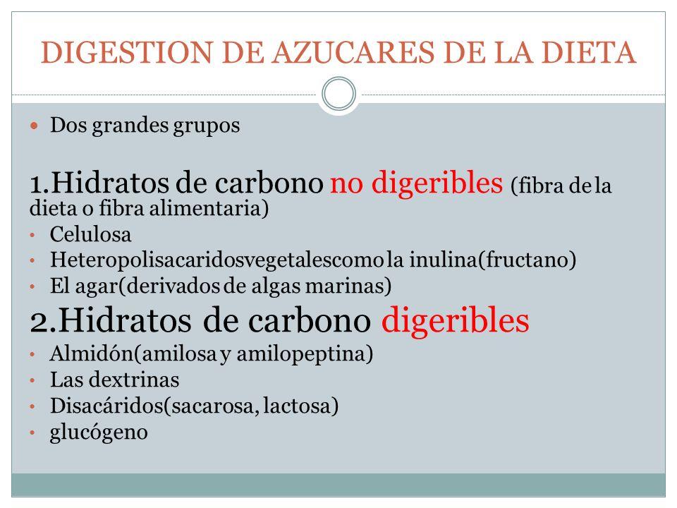 DIGESTION DE AZUCARES DE LA DIETA Dos grandes grupos 1.Hidratos de carbono no digeribles (fibra de la dieta o fibra alimentaria) Celulosa Heteropolisa