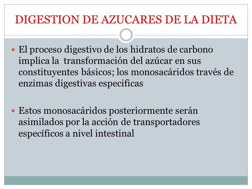 DIGESTION DE AZUCARES DE LA DIETA El proceso digestivo de los hidratos de carbono implica la transformación del azúcar en sus constituyentes básicos;