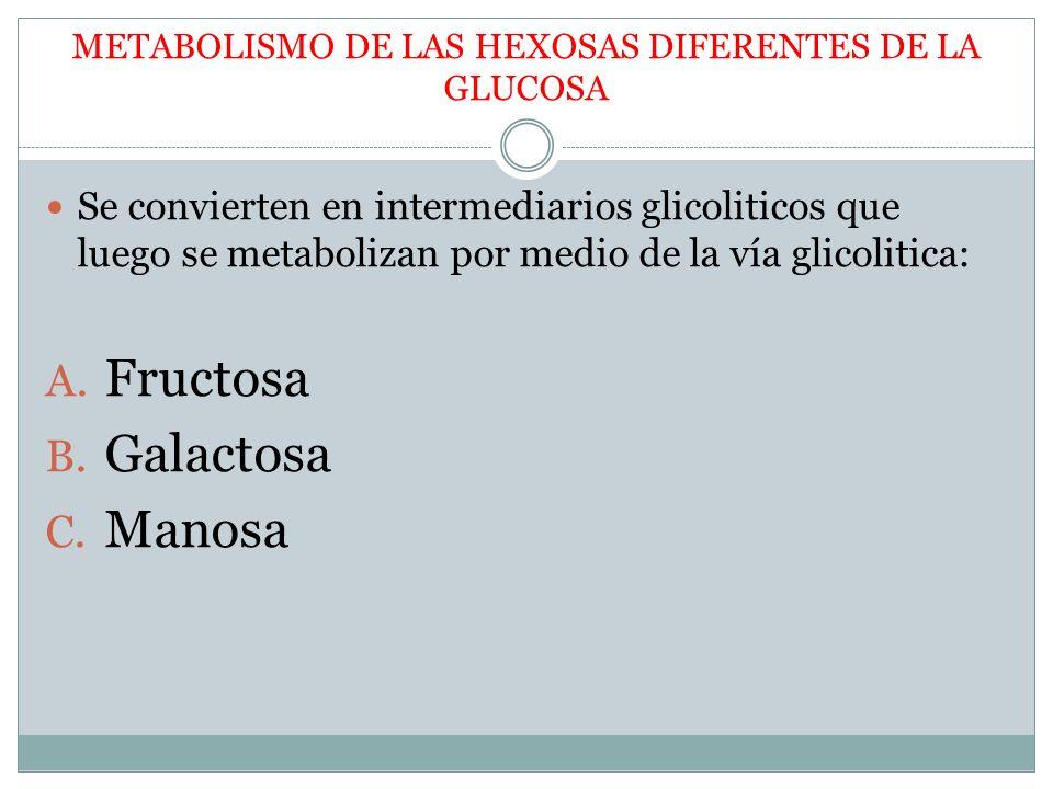 METABOLISMO DE LAS HEXOSAS DIFERENTES DE LA GLUCOSA Se convierten en intermediarios glicoliticos que luego se metabolizan por medio de la vía glicolit