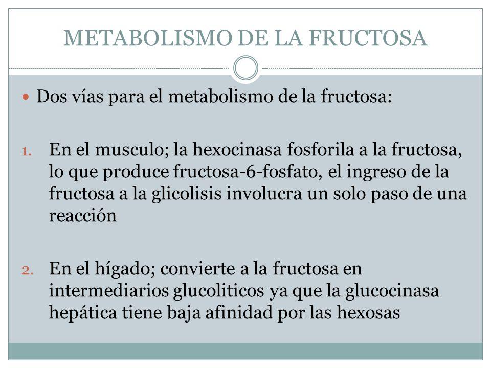 METABOLISMO DE LA FRUCTOSA Dos vías para el metabolismo de la fructosa: 1. En el musculo; la hexocinasa fosforila a la fructosa, lo que produce fructo