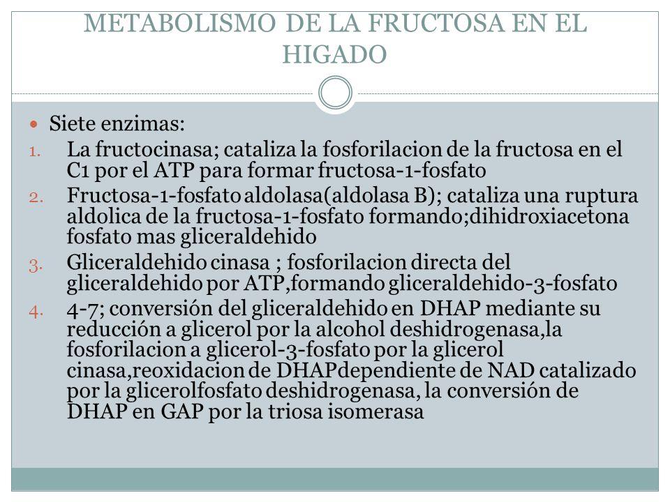 METABOLISMO DE LA FRUCTOSA EN EL HIGADO Siete enzimas: 1. La fructocinasa; cataliza la fosforilacion de la fructosa en el C1 por el ATP para formar fr