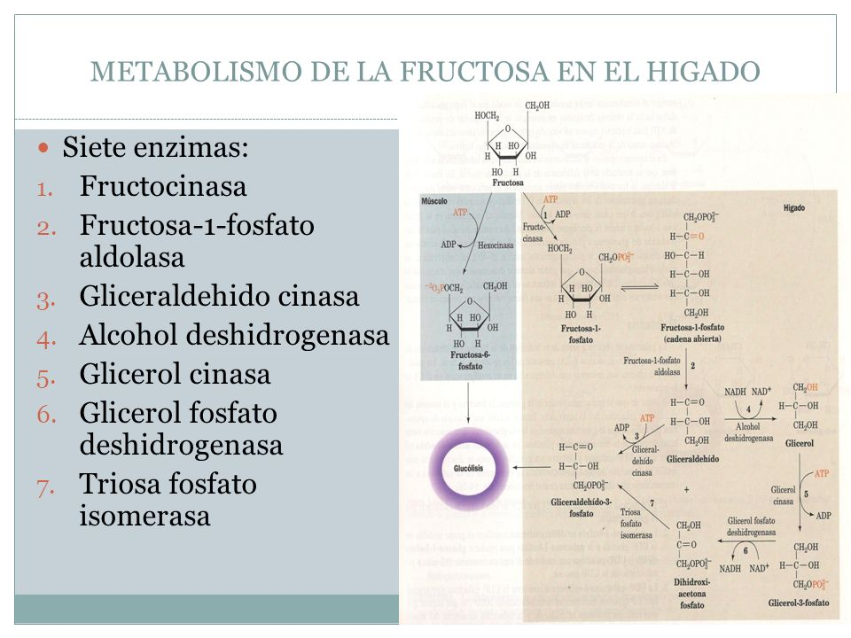 METABOLISMO DE LA FRUCTOSA EN EL HIGADO Siete enzimas: 1. Fructocinasa 2. Fructosa-1-fosfato aldolasa 3. Gliceraldehido cinasa 4. Alcohol deshidrogena