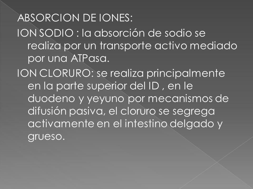 ABSORCION DE IONES: ION SODIO : la absorción de sodio se realiza por un transporte activo mediado por una ATPasa. ION CLORURO: se realiza principalmen