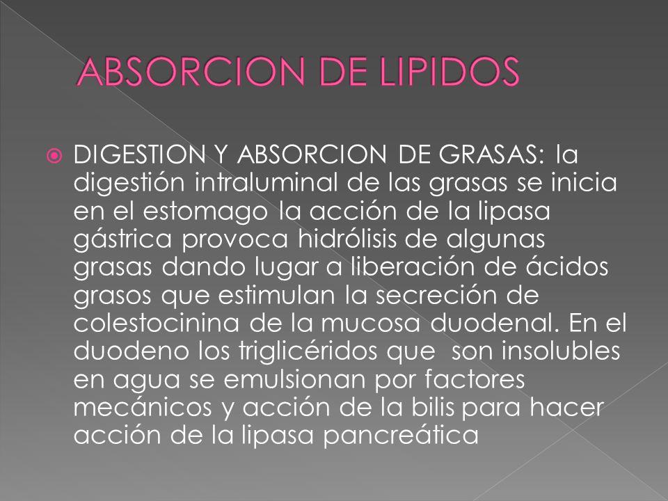 DIGESTION Y ABSORCION DE GRASAS: la digestión intraluminal de las grasas se inicia en el estomago la acción de la lipasa gástrica provoca hidrólisis d