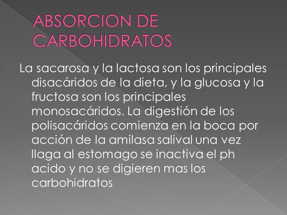 La sacarosa y la lactosa son los principales disacáridos de la dieta, y la glucosa y la fructosa son los principales monosacáridos. La digestión de lo