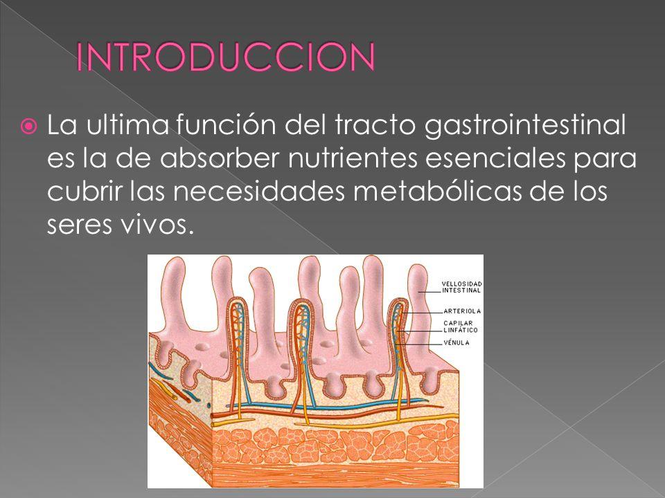 La ultima función del tracto gastrointestinal es la de absorber nutrientes esenciales para cubrir las necesidades metabólicas de los seres vivos.