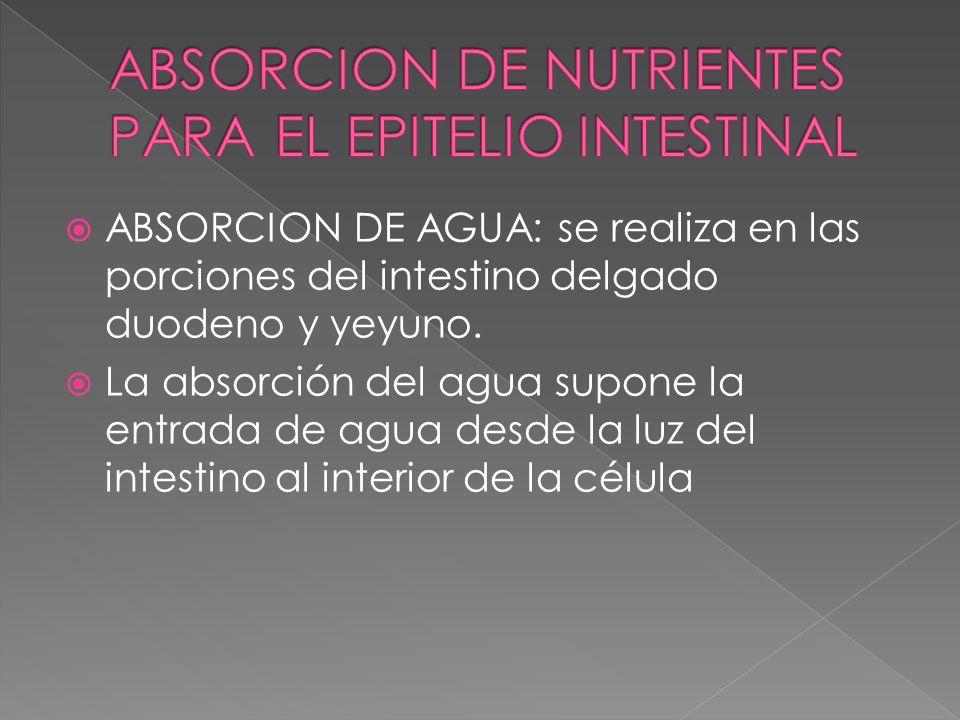 ABSORCION DE AGUA: se realiza en las porciones del intestino delgado duodeno y yeyuno. La absorción del agua supone la entrada de agua desde la luz de