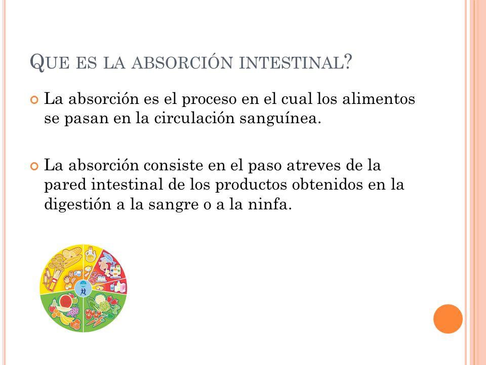 Q UE ES LA ABSORCIÓN INTESTINAL ? La absorción es el proceso en el cual los alimentos se pasan en la circulación sanguínea. La absorción consiste en e