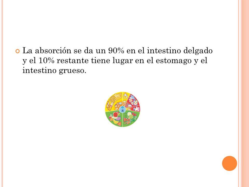 La absorción se da un 90% en el intestino delgado y el 10% restante tiene lugar en el estomago y el intestino grueso.