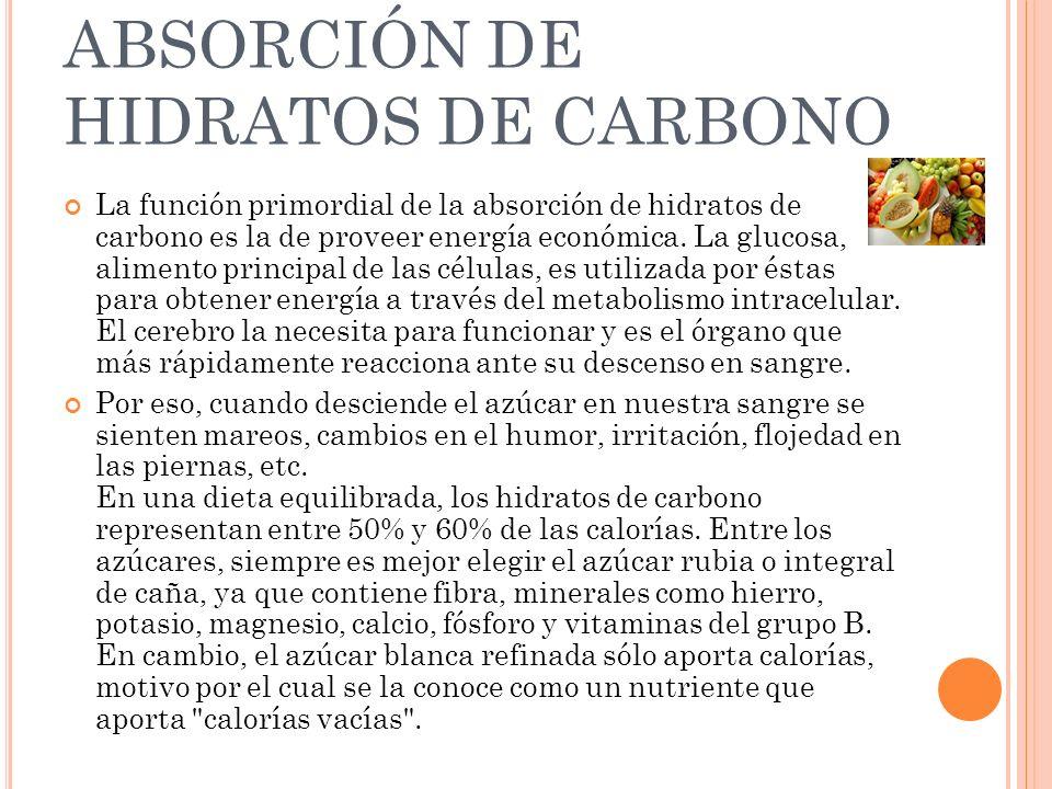 ABSORCIÓN DE HIDRATOS DE CARBONO La función primordial de la absorción de hidratos de carbono es la de proveer energía económica. La glucosa, alimento