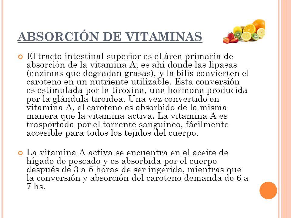 ABSORCIÓN DE VITAMINAS El tracto intestinal superior es el área primaria de absorción de la vitamina A; es ahí donde las lipasas (enzimas que degradan