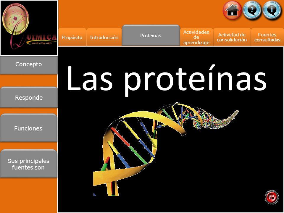 Propósito Introducción Proteínas Actividad de consolidación Actividad de consolidación Fuentes consultadas Fuentes consultadas Actividades de aprendizaje Actividades de aprendizaje Las proteínas Concepto Responde Sus principales fuentes son Sus principales fuentes son Funciones