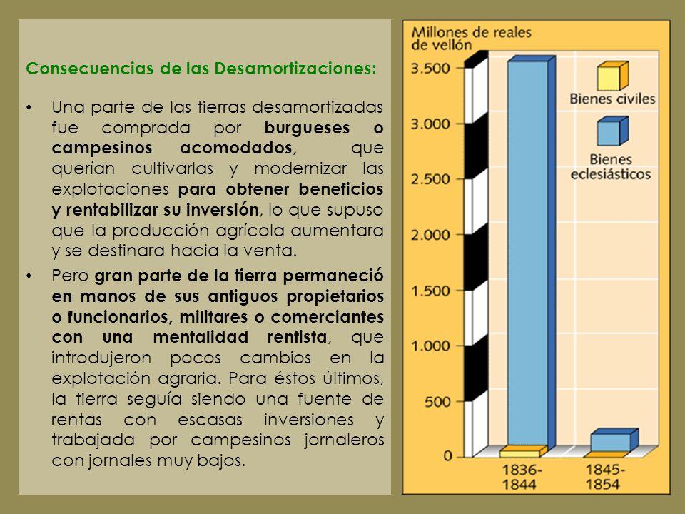 Consecuencias de las Desamortizaciones: Una parte de las tierras desamortizadas fue comprada por burgueses o campesinos acomodados, que querían cultiv