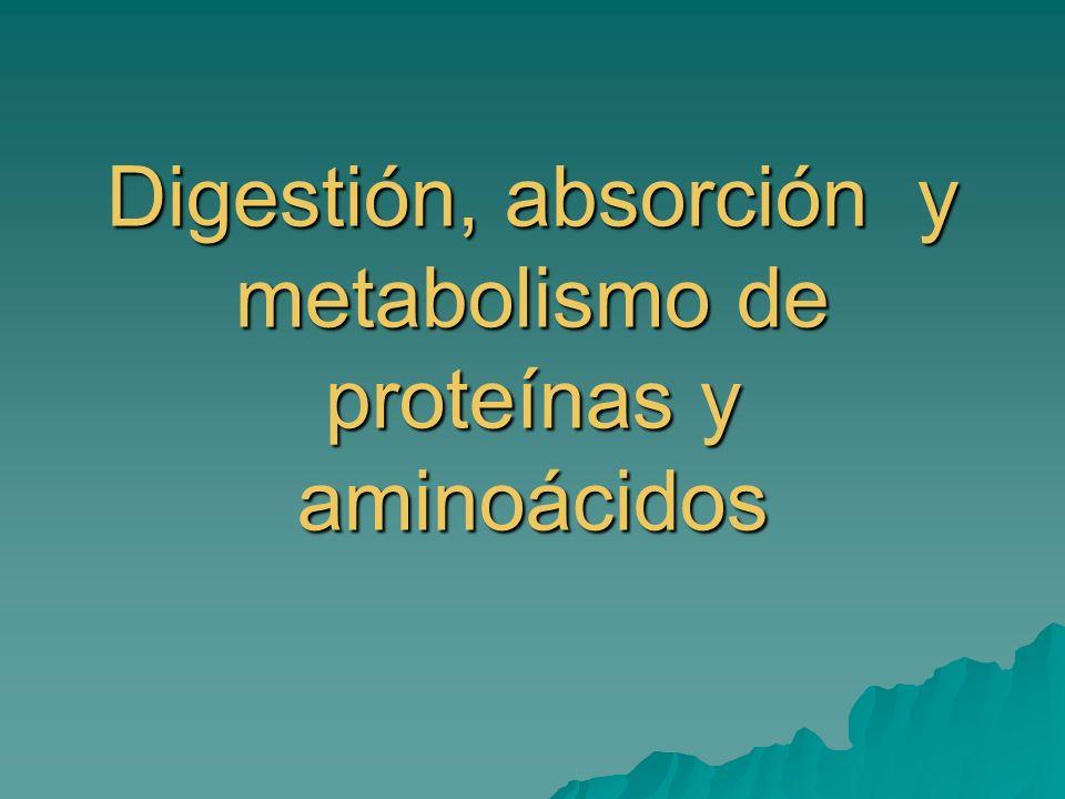 Digestión, absorción y metabolismo de proteínas y aminoácidos