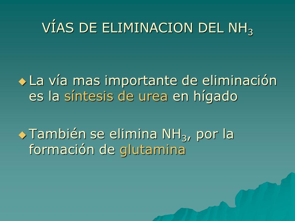 VÍAS DE ELIMINACION DEL NH 3 La vía mas importante de eliminación es la síntesis de urea en hígado La vía mas importante de eliminación es la síntesis