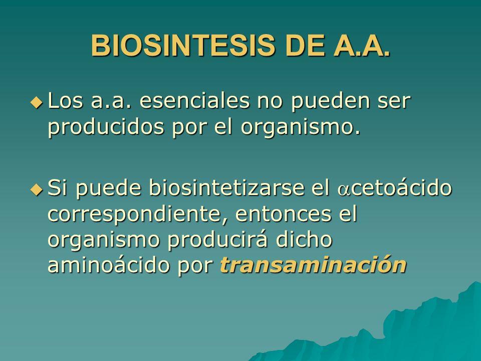 BIOSINTESIS DE A.A. Los a.a. esenciales no pueden ser producidos por el organismo. Los a.a. esenciales no pueden ser producidos por el organismo. Si p