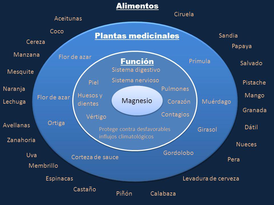 Magnesio Función Plantas medicinales Alimentos Aceitunas Coco Cereza Manzana Naranja Lechuga Uva Membrillo Piñón Pera Dátil Nueces Granada Mango Papay