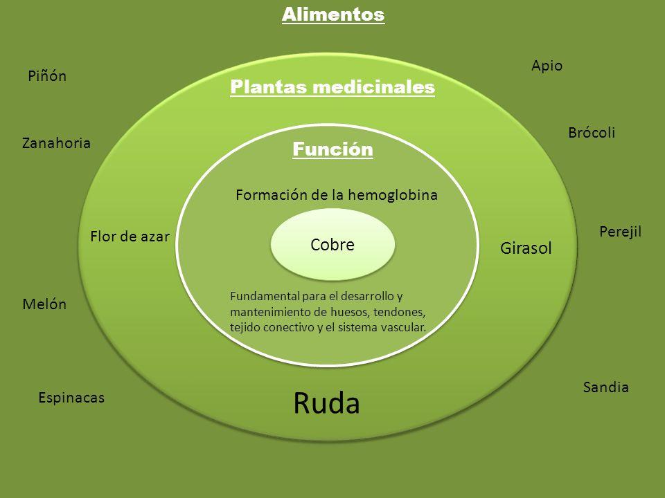 Cobre Función Plantas medicinales Alimentos Fundamental para el desarrollo y mantenimiento de huesos, tendones, tejido conectivo y el sistema vascular
