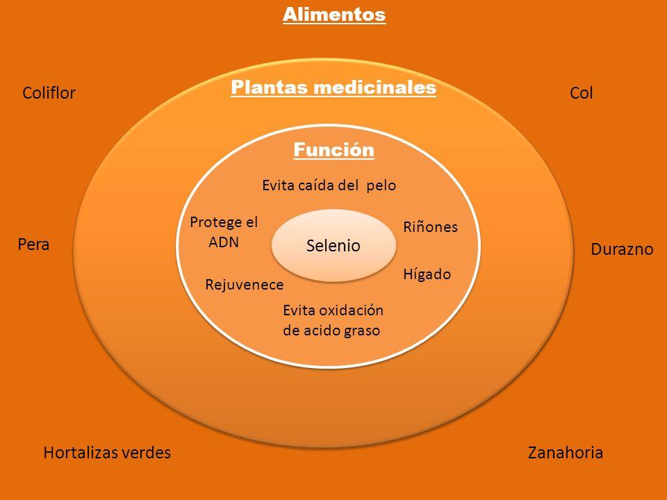 Selenio Función Plantas medicinales Alimentos Evita caída del pelo Evita oxidación de acido graso Protege el ADN Riñones Hígado Rejuvenece Hortalizas