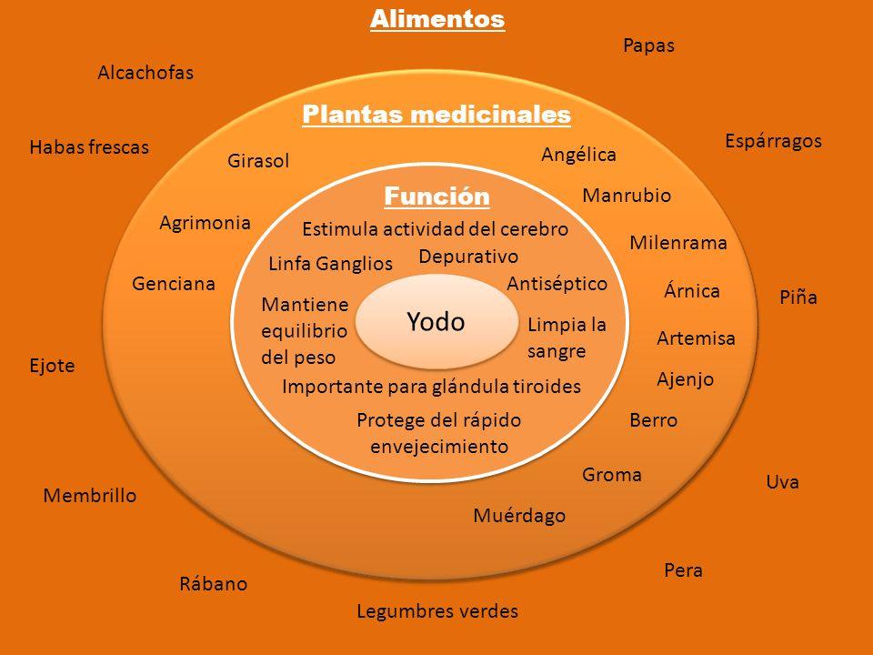 Yodo Función Plantas medicinales Alimentos Linfa Ganglios Protege del rápido envejecimiento Depurativo Antiséptico Importante para glándula tiroides L