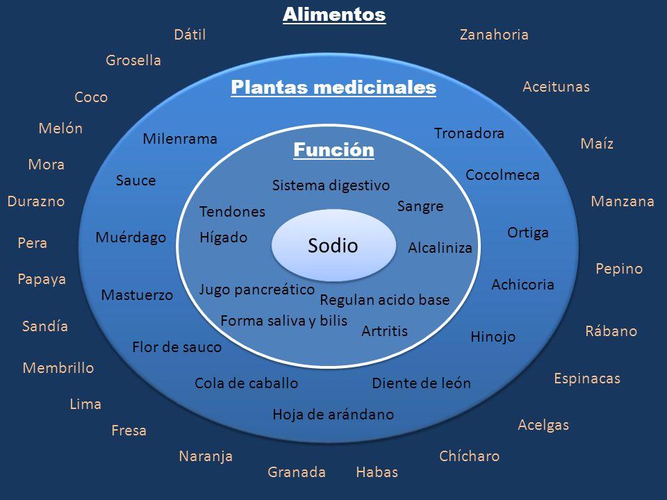 Sodio Función Plantas medicinales Alimentos Sistema digestivo Tendones Hígado Forma saliva y bilis Jugo pancreático Sangre Alcaliniza Regulan acido ba
