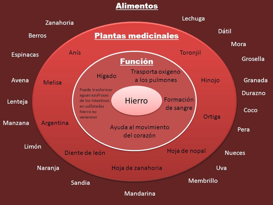 Hierro Función Plantas medicinales Alimentos Trasporta oxigeno a los pulmones Formación de sangre Hígado Ayuda al movimiento del corazón Puede trasfor