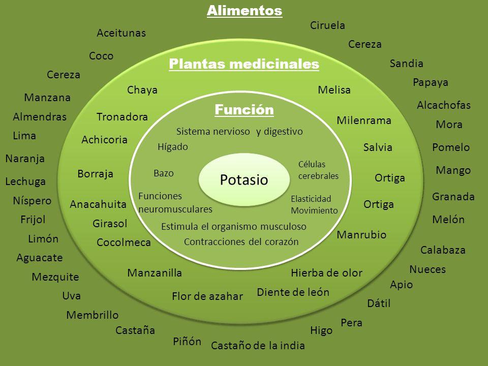 Potasio Función Plantas medicinales Alimentos Sistema nervioso y digestivo Células cerebrales Elasticidad Movimiento Contracciones del corazón Estimul