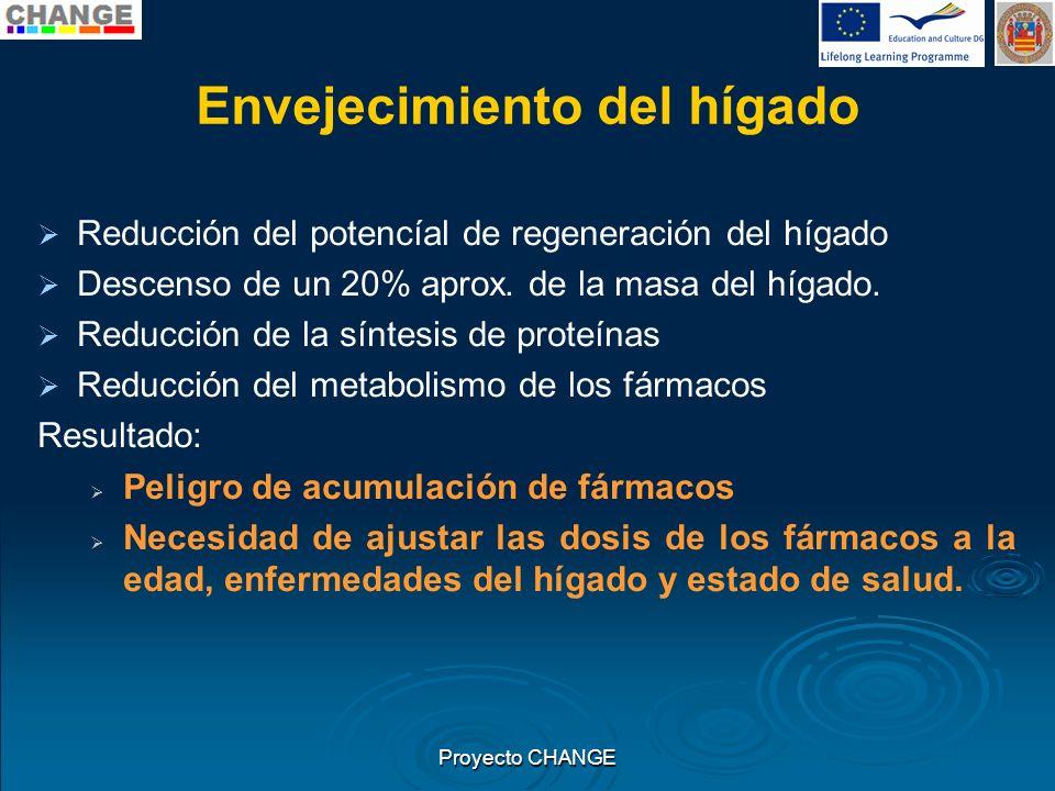 Envejecimiento del hígado Reducción del potencíal de regeneración del hígado Descenso de un 20% aprox. de la masa del hígado. Reducción de la síntesis