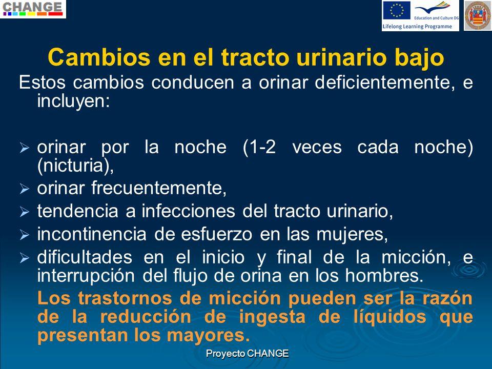 Cambios en el tracto urinario bajo Estos cambios conducen a orinar deficientemente, e incluyen: orinar por la noche (1-2 veces cada noche) (nicturia),