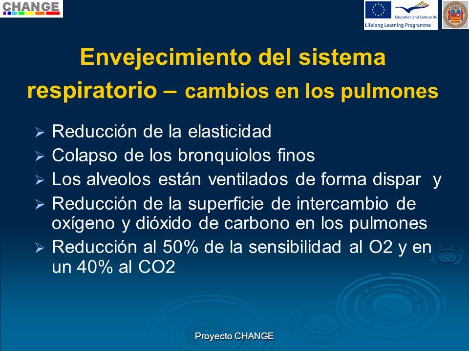 Envejecimiento del sistema respiratorio – cambios en los pulmones Reducción de la elasticidad Colapso de los bronquiolos finos Los alveolos están vent