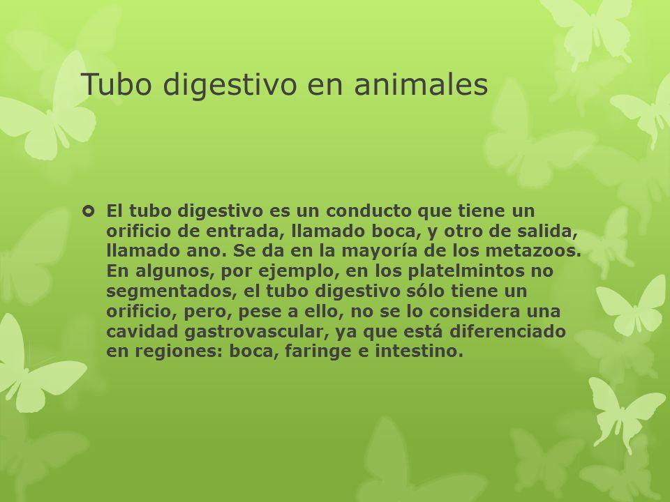 Tubo digestivo en animales El tubo digestivo es un conducto que tiene un orificio de entrada, llamado boca, y otro de salida, llamado ano. Se da en la