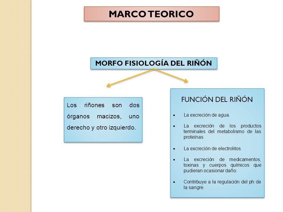 MORFO FISIOLOGÍA DEL RIÑÓN L os riñones son dos órganos macizos, uno derecho y otro izquierdo.