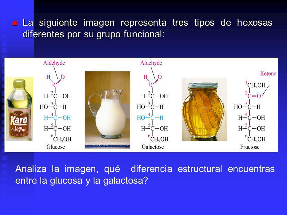 La siguiente imagen representa tres tipos de hexosas diferentes por su grupo funcional: La siguiente imagen representa tres tipos de hexosas diferentes por su grupo funcional: Analiza la imagen, qué diferencia estructural encuentras entre la glucosa y la galactosa?