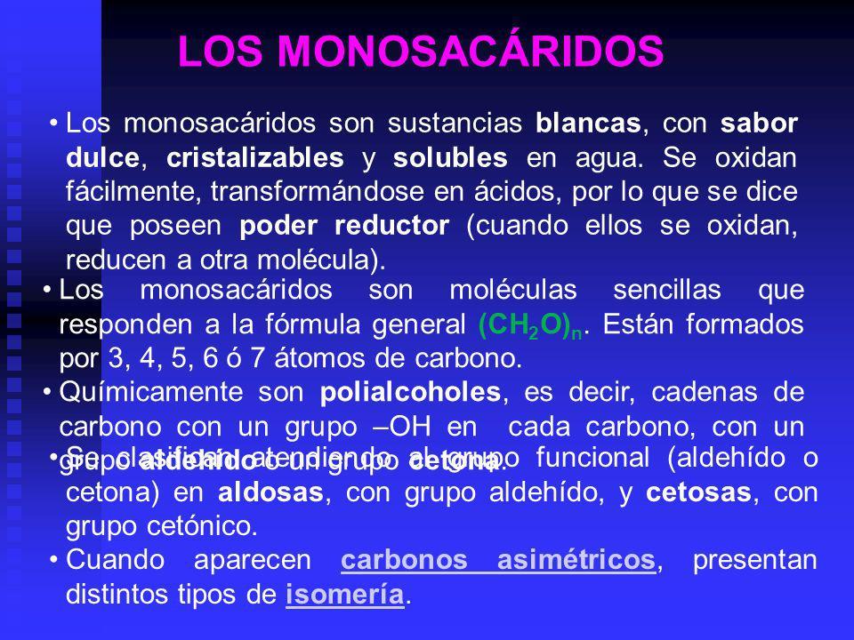 LOS MONOSACÁRIDOS Los monosacáridos son sustancias blancas, con sabor dulce, cristalizables y solubles en agua. Se oxidan fácilmente, transformándose