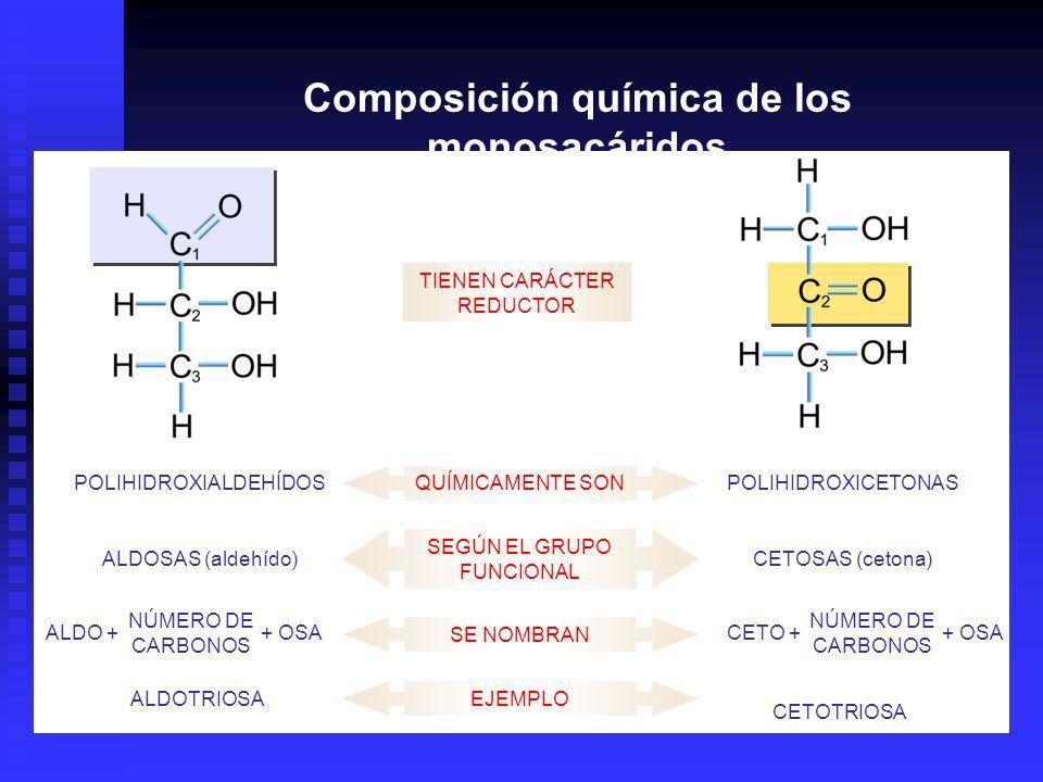 QUÍMICAMENTE SONPOLIHIDROXICETONASPOLIHIDROXIALDEHÍDOS SEGÚN EL GRUPO FUNCIONAL CETOSAS (cetona)ALDOSAS (aldehído) TIENEN CARÁCTER REDUCTOR SE NOMBRAN ALDO + NÚMERO DE CARBONOS + OSACETO + NÚMERO DE CARBONOS + OSA EJEMPLO CETOTRIOSA ALDOTRIOSA Composición química de los monosacáridos