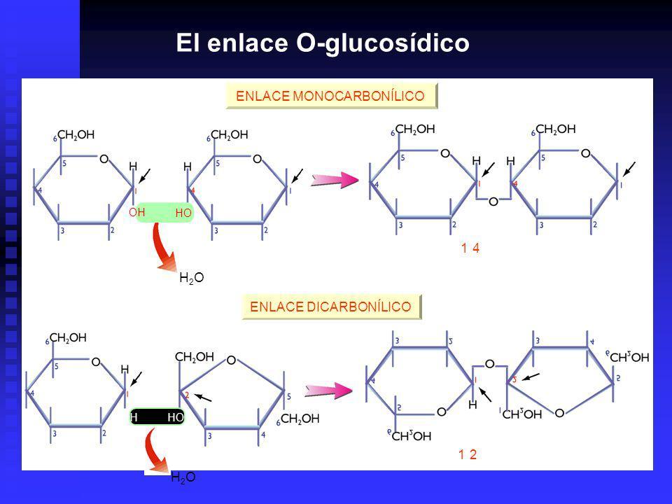 H2OH2O H2OH2O OH HO Enlace (1-4) - O -glucosídico Enlace (1-2) - O -glucosídico ENLACE MONOCARBONÍLICO OH HO ENLACE DICARBONÍLICO El enlace O-glucosídico
