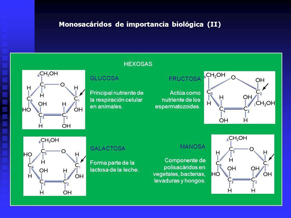 HEXOSAS Principal nutriente de la respiración celular en animales. Forma parte de la lactosa de la leche. Actúa como nutriente de los espermatozoides.
