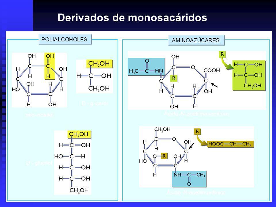 AMINOAZÚCARES POLIALCOHOLES D - glucitol D - glicerol mio-inositol Ácido -N-acetilneuramínico Ácido -N-acetilmurámico Derivados de monosacáridos