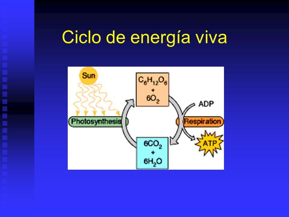 Ciclo de energía viva