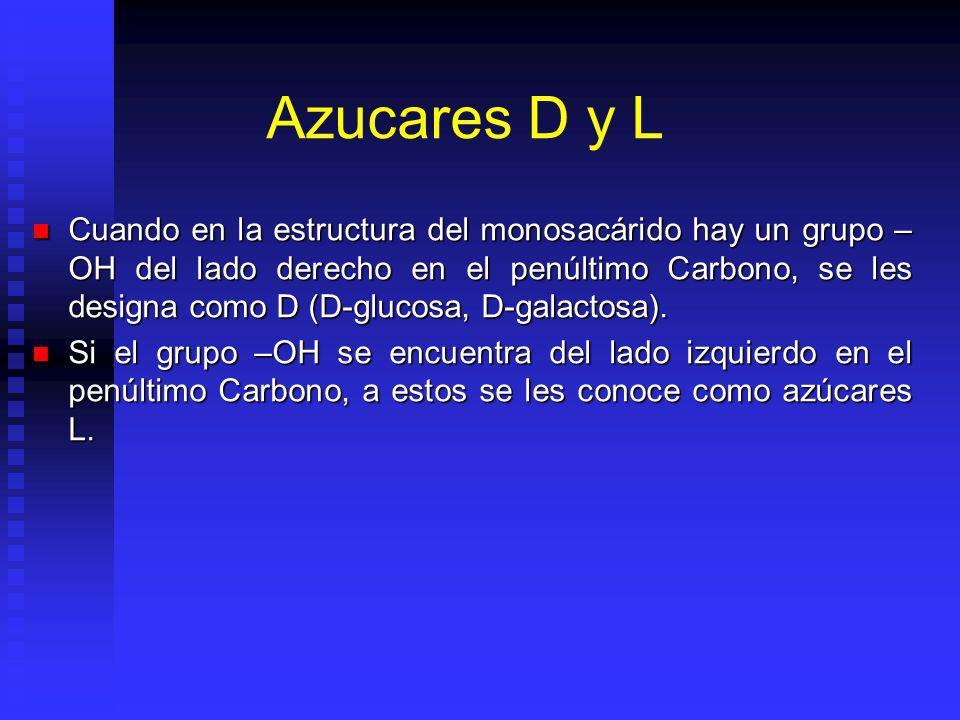 Azucares D y L Cuando en la estructura del monosacárido hay un grupo – OH del lado derecho en el penúltimo Carbono, se les designa como D (D-glucosa, D-galactosa).